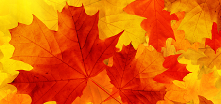 Fall Leaves featured